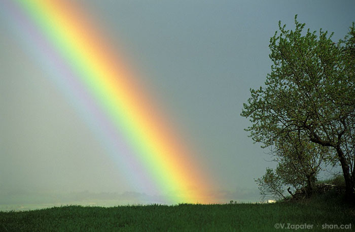 Arcoiris y lluvia primaveral cerca de Guissona. Lleida, Catalunya, España. Rainbow and spring rain near Guissona. Lleida, Catalonia, Spain.