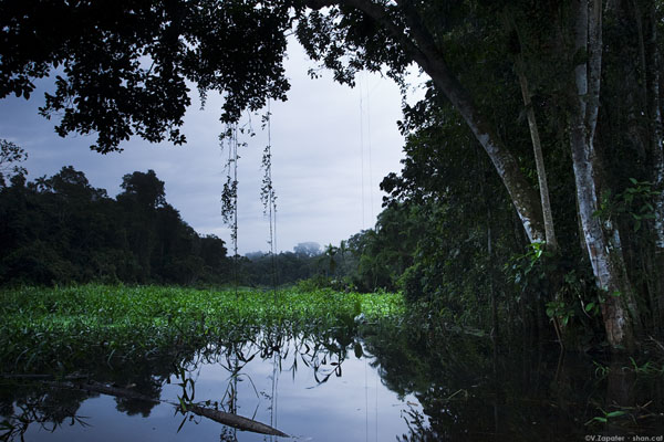 Yasuni River. Yasuni National Park (Orellana, Ecuador)