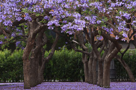 Primavera en el parque de la Pegaso (Barcelona)